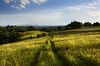 A Path Is Made By Walking On It (Dimmilan) Tags: sky nature grass clouds landscape countryside path serbia hills fields rajac galleryoffantasticshots