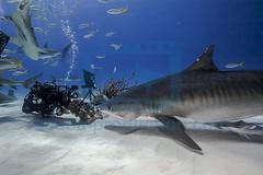 2014 03 TIGER BEACH-2036