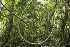 Curves | Mulu National Park (adiaphane) Tags: travel southeastasia sarawak malaysia borneo mulunationalpark