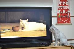 DSC_6840 (瑟琳娜) Tags: cat neko 貓