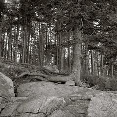 img185 (philbrookjason) Tags: wood bw 120 6x6 film rolleiflex square tmax maine 400 granite hd automat tessar pyrocat tmy2