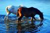Depois das chuvas (Eduardo Amorim) Tags: brazil horses horse southamerica field água brasil criollo caballo cheval caballos agua sonnenuntergang dam barragem campo cavalos pelotas damm pferde cavalli cavallo cavalo pferd barrage pampa champ anoitecer hest aguada hevonen campanha brésil chevaux entardecer crepúsculo 馬 américadosul açude diga häst 말 amériquedusud лошадь 马 sudamérica suramérica américadelsur סוס südamerika crioulo caballoscriollos criollos حصان costadoce americadelsud ม้า crioulos cavalocrioulo americameridionale caballocriollo auffangen eduardoamorim cavaloscrioulos ঘোড়া