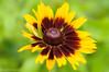 Green Sea (David S Wilson) Tags: uk flowers england flower ely fens 2014 flowersplants nikond90 davidswilson lightroom5 micronikkor40mmf28lens