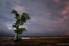 Oak and lightning (rowe_rosemary) Tags: storm beach night mississippi oak long exposure lightning d3200