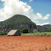 "Vinales tobacco field • <a style=""font-size:0.8em;"" href=""https://www.flickr.com/photos/40181681@N02/14597608257/"" target=""_blank"">View on Flickr</a>"