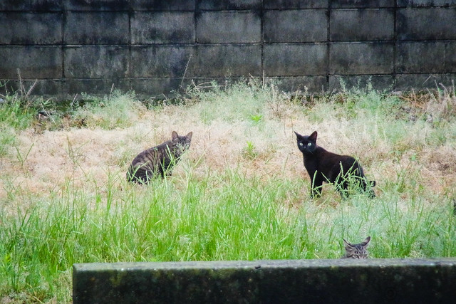 Today's Cat@2014-07-13
