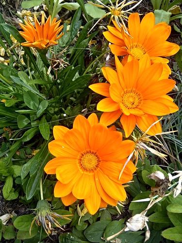Orange Stream