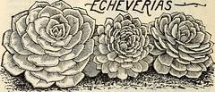 Anglų lietuvių žodynas. Žodis bedding geranium reiškia patalynės pelargonija lietuviškai.