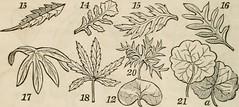 Anglų lietuvių žodynas. Žodis runcinate leaf reiškia runcinate lapų lietuviškai.