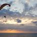 Netanaya_ Sky Diving _ 1_Dana Friedlander_IMOT