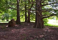 American Hosta Society National Display Garden (Jazmin Medrano) Tags: trees garden illinois midwest american universityofillinois uiuc urbana champaign hosta society hostasociety
