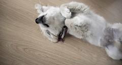 DSC_0931 (Manuel D Snchez) Tags: dogs perros dogos seleccionar