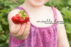 Young girl holding out a ripe red strawberry (MichelleLymanDesign) Tags: food closeup fruit giant big holding strawberry child sweet harvest tasty fresh huge unusual showing horticulture ripe gathered anomaly abnormality