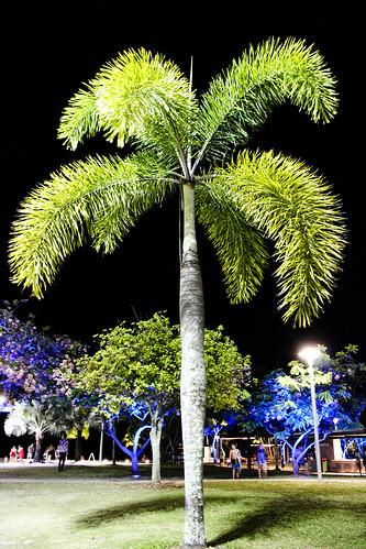 Palm beach ?
