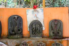 nagas (kuuan) Tags: mf manualfocus penf zuiko penff1440mm 1440mm nex5n naga snake stones carvings offerings altarkarnataka india