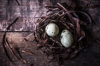 Nest~ 52 Still Lifes Week 12/Semana 12 Round/Redondo