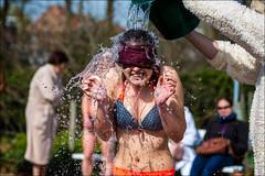 16-7735 (Ijsberen-Boom) Tags: boom ijsberen kzcyboom doop swim zwemclub zwemmen vlaanderen belgium