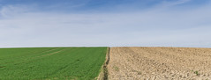Simplicity (Jan Moons) Tags: simple simplicity landscape basic sky field gras dirt sony sony20mm sonya6000 fixed fixedlens prime belgium minimalistic minimal lines blue green brown