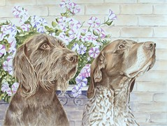 Doug and Josh (FransArt) Tags: dogs gundogs animals pet portrait painting acrylic paper