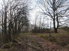 P1030128 (Unterwegs im Trierer Land) Tags: kanzem wiltingen saarbogen