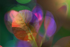 Colours in Nature (CCphotoworks) Tags: bokeh pretty foliage leaves colourful nature colours
