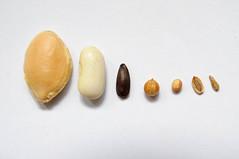 Seeds - Graines (fred_v) Tags: macromondays graine seeds
