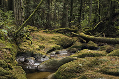 Roberts Creek (Steven Olmstead) Tags: rainforest creek stream moss rocks forest trees canada d610