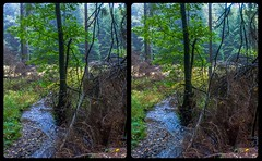 Upstate Saxony-Anhalt 3-D / CrossEye / Stereoscopy / HDR / Raw (Stereotron) Tags: sachsenanhalt saxonyanhalt harz mountains gebirge europe germany river creek tree plants forest woods outback backcountry autumn fall nature crosseye crosseyed crossview xview cross eye pair freeview sidebyside sbs kreuzblick twin canon eos 550d yongnuo radio transmitter remote control synchron kitlens 1855mm tonemapping hdr hdri raw availablelight 3d 3dphoto 3dstereo 3rddimension spatial stereo stereo3d stereophoto stereophotography stereoscopic stereoscopy stereotron threedimensional stereoview stereophotomaker stereophotograph 3dpicture 3dglasses 3dimage ostfalen ostfalia hardt hart hercynia harzgau