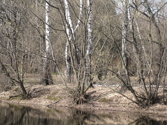 shore of pond (VERUSHKA4) Tags: pond water tree trunk reflection russia ville vue view season spring nature april