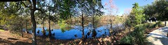 Pond in shadows (LarryJay99 ) Tags: oblong sunlight urbannature photostream pondscape waterfeature blue cypress foliage nature shadows smallwater palmbeachcounty westpalmbeach photography panorama pond boom reflection perspective fence digitalphotography appleiphone7 waterscape floridapond hammock sky iphone7plusbackcamera399mmf18 pano