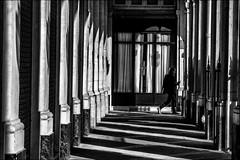 Jungle du parisien! (vedebe) Tags: paris ville city urbain rue street humain people noiretblanc netb nb monochrome bw ombres lumières architecture