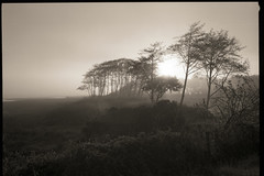 tomales dawn (stormiticus) Tags: mf fuji gsw690iii 6x9 kodak tmy2 xtol film bw analog blackandwhite 65mm