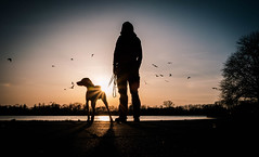 bird watching (Dan-Schneider) Tags: streetphotography street silhouette shadow sunset light fuji dog colour nature sun