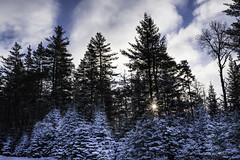 Adirondack Park Frosted Trees-0557-2 (Ron Biedenbach) Tags: red trees snow sky morning adirondack park sunrise sun woods forest