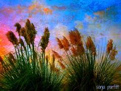 textured sky.... explore (Sonja Parfitt) Tags: