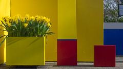 Mondrian (Simon Attila Miklós) Tags: modern order nice abstract colorful flowers sunshine ordered peace calm modriani art midernart modernart 2000s 2010s fascinating red blue yellow white black boxes squares lines nodimension narcis