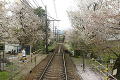 Japan2015_690 (wallacefsk) Tags: japan ¤é¥» kyoto ¨ê³£ randen ´p¹q sakura äåªá flowers 日本 京都 嵐電 櫻花