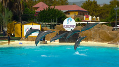 Delfines (fjenciso) Tags: delfin delfín delfines dolphin dolphins peces pescados piscina swimming pool benalmádena selwo marina selvomarina delfinarium benalmadena málaga malaga andalucía españa spain fjenciso animal animales acuatico acuático acuaticos