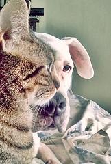 DSC_0201-2 Loly volvió, Indígena es una estrella. (Aprehendiz-Ana Lía) Tags: fotografía flickr analialarroude gata perro mascotas chat dogoargentino indígena loly cat cute mirada bondad amor amistad celular retrato ojos verde digital yahoo portrait telefonino nikon macro felino gatti perrosblancos dogos dogphotography argentina recuerdo dog interior