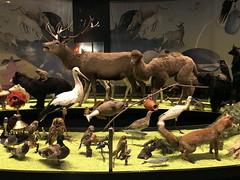 tilburg_1_046 (OurTravelPics.com) Tags: tilburg stuffed animals de dieren van jeroen bosch exhibition first floor natuurmuseum brabant