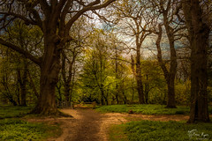 Ashenbank Woods (Bren Ryan (RyanPhotography)) Tags: kent landscape woodland ashenbankwoods woodlandwalks cobham