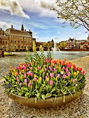Beautiful flowers on eastern day at The Hague (Sander Pot) Tags: fontijn fountain water building architecture eastern pasen bloembol bloembollen tulpen iphone colors color tulips tulip flowers flower tweedekamer parliament vijver denhaag thehague hofvijver