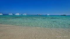 Crystal clear ... This Is Egypt (Hazem Hafez) Tags: sea beach redsea hurghada water sand island egypt sunny pure blue