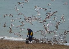 Dinner time (Coseleygirl) Tags: sea seagulls beach