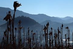 Patrimonio alimentario del maíz de la CDMX está en peligro de perderse: investigador de Chapingo (conectaabogados) Tags: alimentario cdmx chapingo está investigador maíz patrimonio peligro perderse