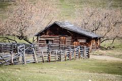 Old log cabin (Jessie T*) Tags: paullakeroad kamloopsbc canada ranch logcabin fence