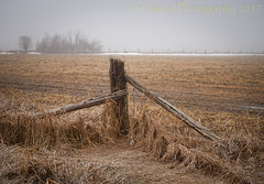 On the Breath of Time (HFF) (13skies) Tags: hff fence happyfencefriday wirefence old supports foggy foggyday field grasses colder barrier private beyond tangled distance snow melting spring winter changes season