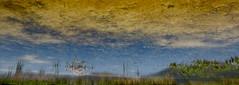 The Loom of the Lagoon (andressolo) Tags: distortions distortion distorted reflection reflect reflected reflections reflejos reflejo lake lagoon lago laguna louro water agua