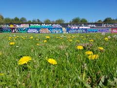 Street art Cardiff, Sevenoaks Park (DJLeekee) Tags: streetart graffiti cardiff sevenoaks park requiem amok best pirates plus