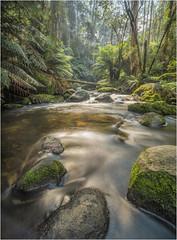 Toorongo River (Pwa25) Tags: toorongo toorongofalls victoria noojee river longexposure rocks trees bush country australia stream canon leefilter